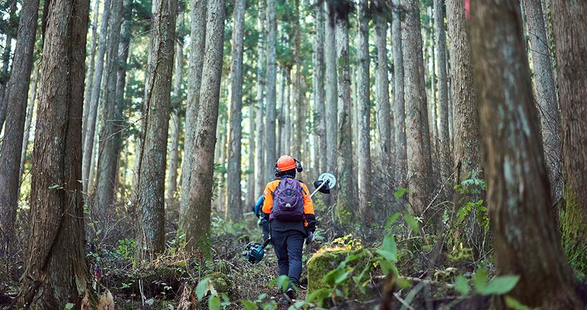 林業のイメージ